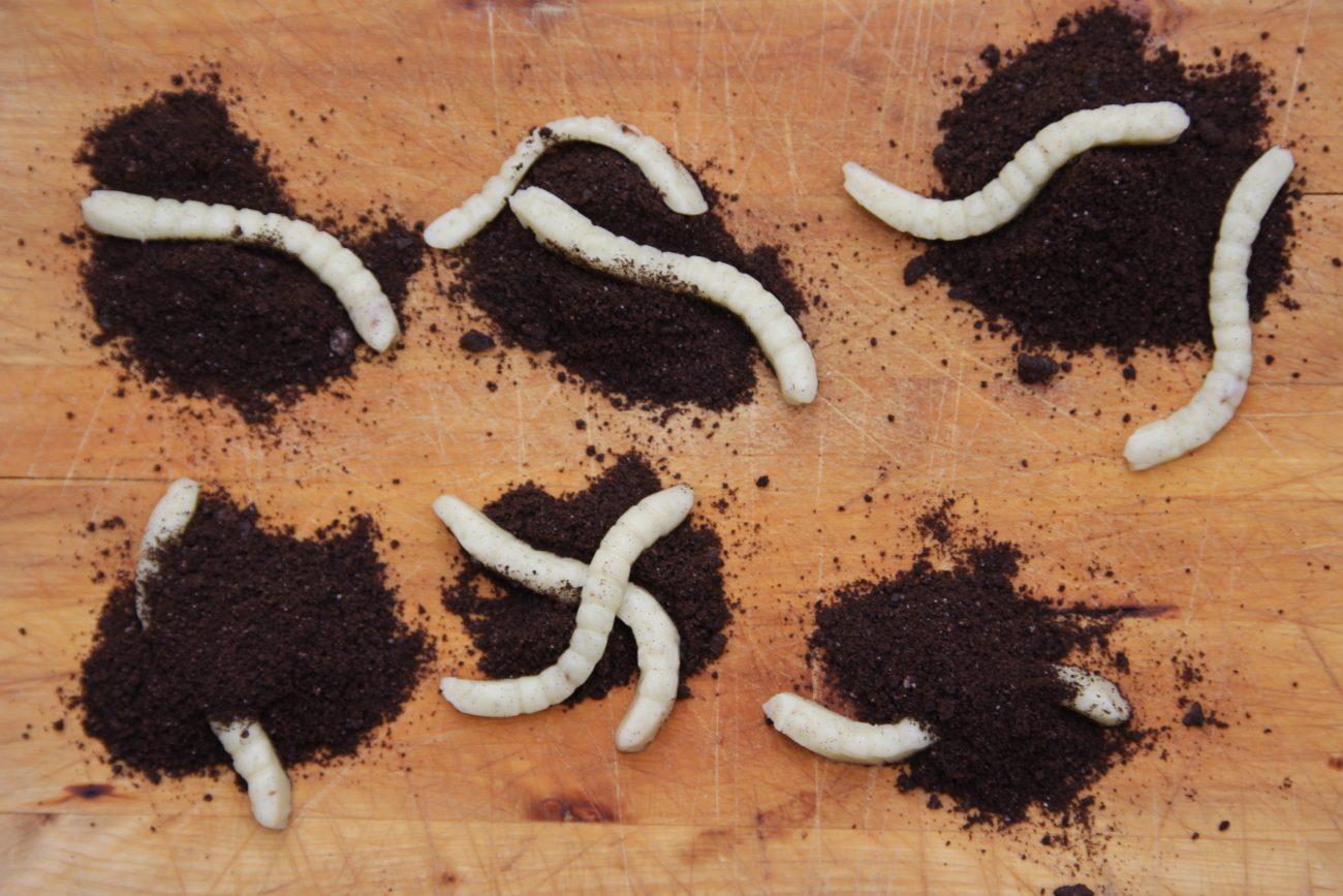 Eetbare wormen